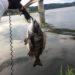 【釣果報告】台風前のシーバス釣行。アタリが連発!まさかの魚も・・・