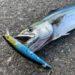 【釣果報告】ダイソーの100円ミノーは釣れるのかって?俺が釣ってきてやるよ。